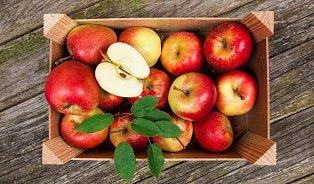 Vitalia.cz: Atlas jablek: 16oblíbených odrůd