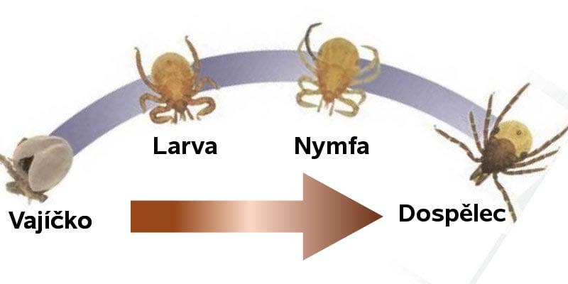 Životní cyklus klíštěte
