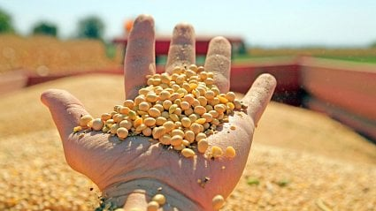 Vitalia.cz: Evropa dává GMO do klatby