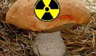 Černobyl, Fukušima, Evropa - cesty radioaktivity v potravním řetězci