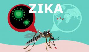 Virus Zika– jak snížit rizika nákazy