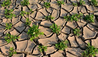 Proč by se kvůli suchu nemělo zdražovat jídlo