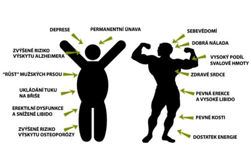 Testosteron u mužů