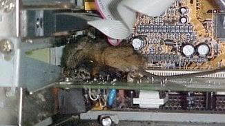 Root.cz: Špína v počítačích: mrtvé myši, prach a pavouci