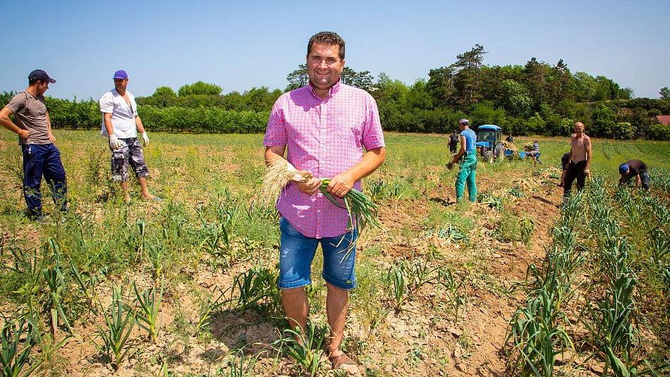 Farma Dryák: Česnek nepaličák suší dobovým způsobem vsýpce z15.století