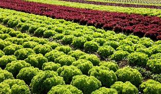 Citlivější přístroje odhalí nelegální používání pesticidů napolích