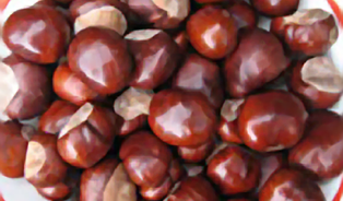 Jedlé kaštany: Pochoutka podzimu