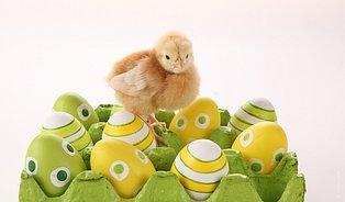 Značení auchovávání vajec: Vajíčko na tvrdo vydrží až desetdní