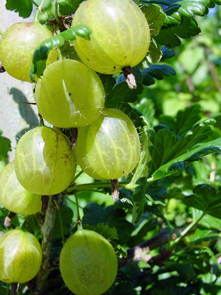 Kdy co roste - české ovoce a zelenina
