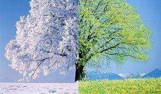Lipový květ je jednička vpřírodní léčbě