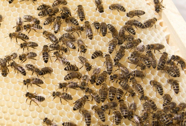 Panenský med vzniká v pohádkovém prostředí