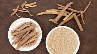 120na80.cz: Zlepšete si kondici se sibiřským kořenem