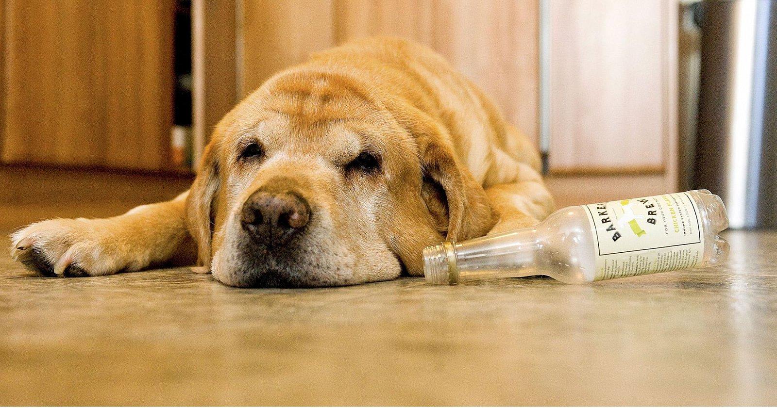 Pivo pro psy