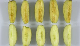 Firma pěstuje již třetí druh nehnědnoucích jablek