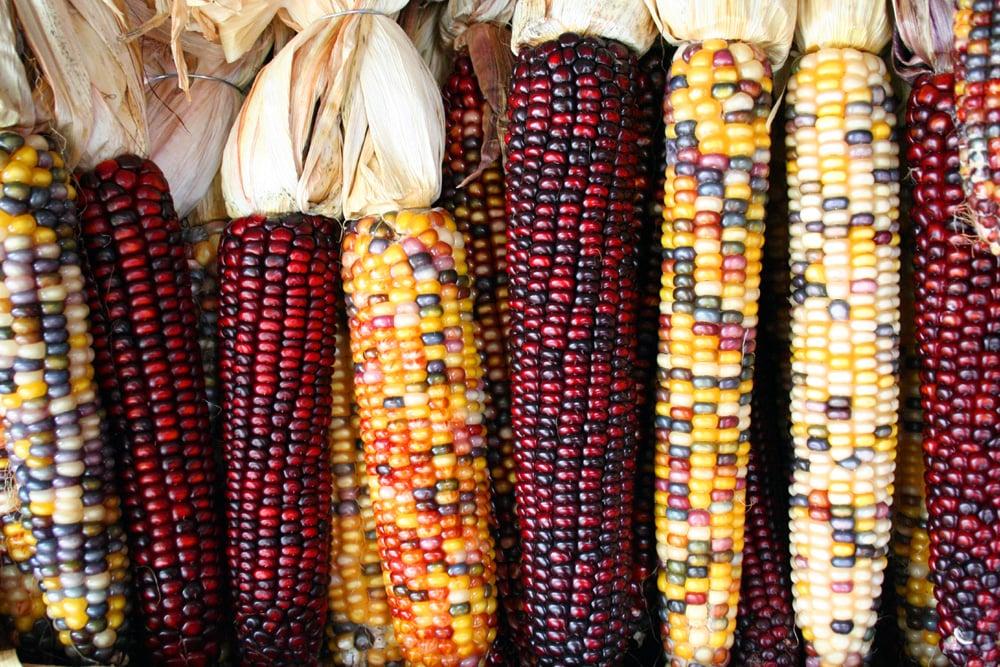 Kukuřice jako příloha?