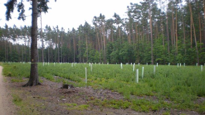 Obnova porostu v lesích u Hradce Králové