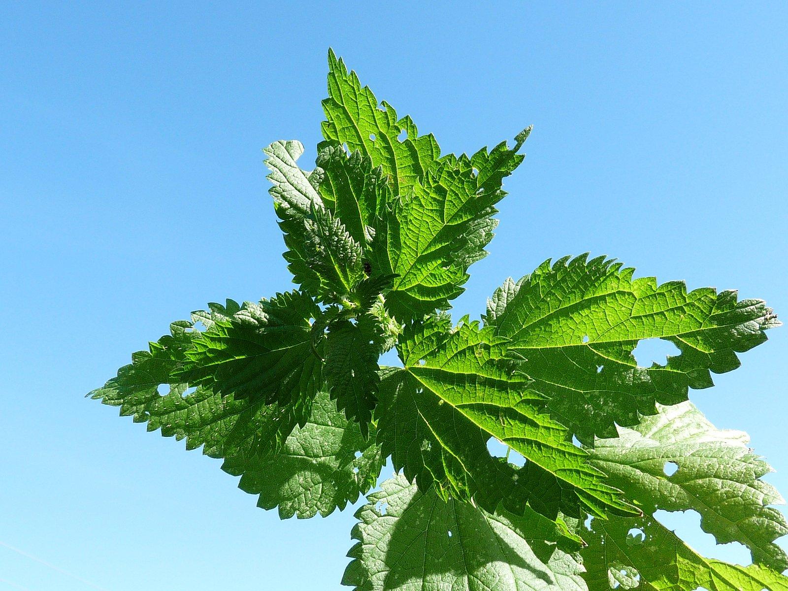 Jarní léčivé byliny