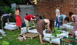 Komunitní zahrady pěstují zeleninu isousedské vztahy