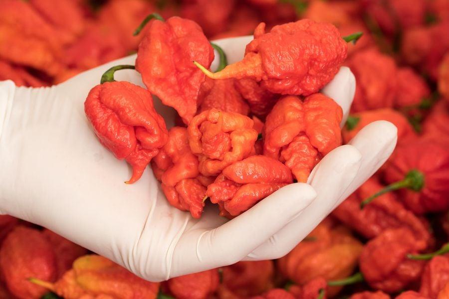 My-Chilli vyrábí pálivé chilli a BBQ omáčky a další delikatesy