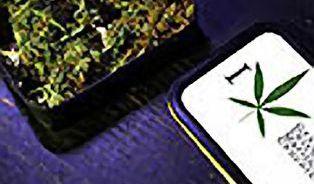 Jak konzumovat marihuanu?