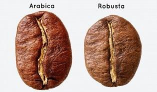 Je arabika lepší káva než robusta?