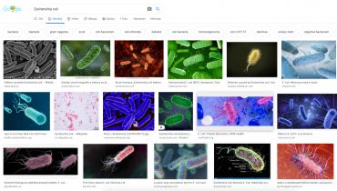 Obrázky bakterie Escherichia coli ve vyhledávání Google.