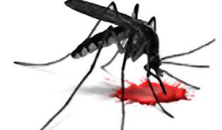 Kam zmizeli komáři? Radujme se, letos nejsou