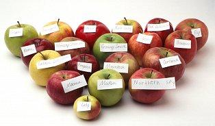 Kolik je vovoci vitamínů? Údaje se podezřele liší