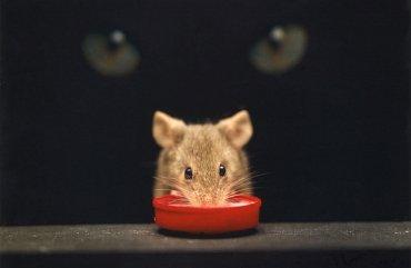 Toxoplasma - parazit si s člověkem umí pohrát jako kočka s myší
