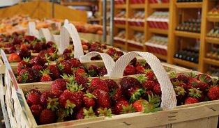 Trojnásobná doba sklizně a nejsladší jahody