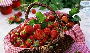 Včem jsou čerstvé jahody unikátní? Jen vůni tvoří čtyři stalátek