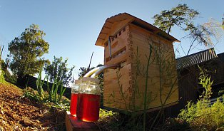 Revoluce ve včelařství? To se ještě uvidí