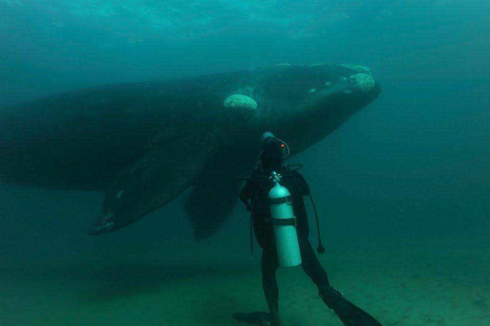 Úvodní pořad Primy Zoom: dokumentární cyklus Mořští velikáni