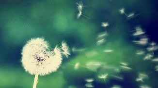 120na80.cz: Pyly útočí. Braňte se