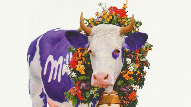 Čokoláda Milka slaví již 120.narozeniny. Kráva je sní od samého počátku, ale vypadala jinak
