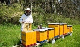 Vitalia.cz: Plástečkový med je nejvíc