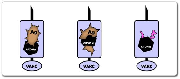 Na obrázku jsou tři základní typy vakcín. (1) Celulární, která obsahuje celý původní patogen v jeho inaktivované nebo oslabené formě. (2) Acelulární, která obsahuje fragmenty původního celulárního antigenu – směs fragmentů jeho různých částí. (3) Toxoidová vakcína, která obsahuje fragmenty původního toxinu – směs fragmentů jeho různých částí.
