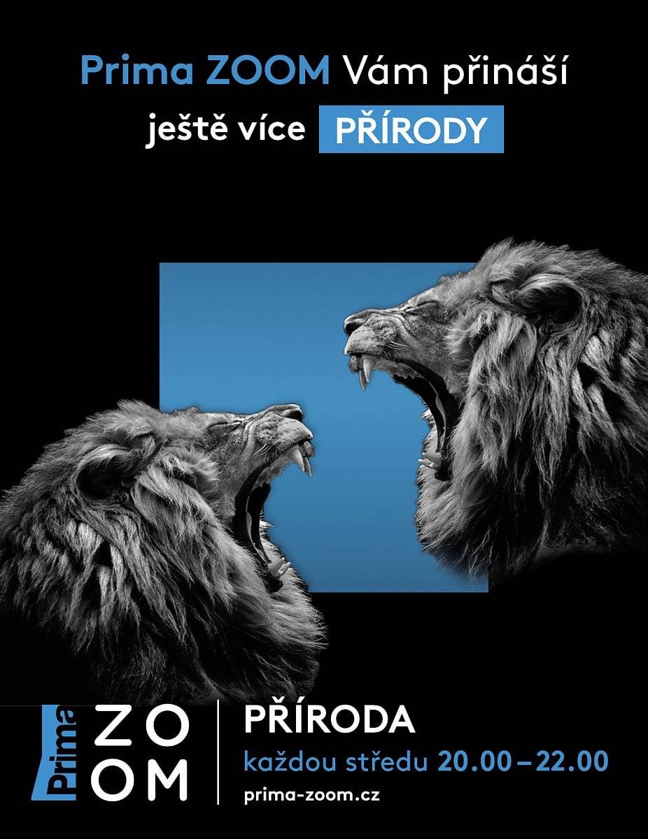 Prima Zoom od října 2020