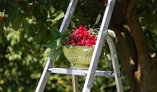 """Na ovoce mapuje ovocné stromy a keře, které jsou """"ničí"""""""