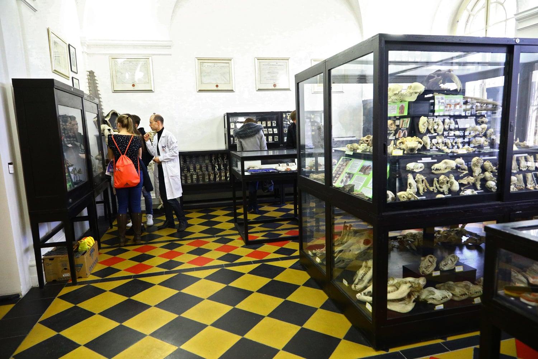Den otevřených dveří: Stomatologické muzeum