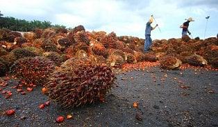 Zdanění palmového oleje by bylo nebezpečným precedentem