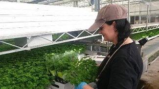 Podnikatel.cz: Velký byznys s bylinkami, co míří do supermarketů
