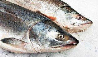 Prvním povoleným GMO živočichem kjídlu je losos