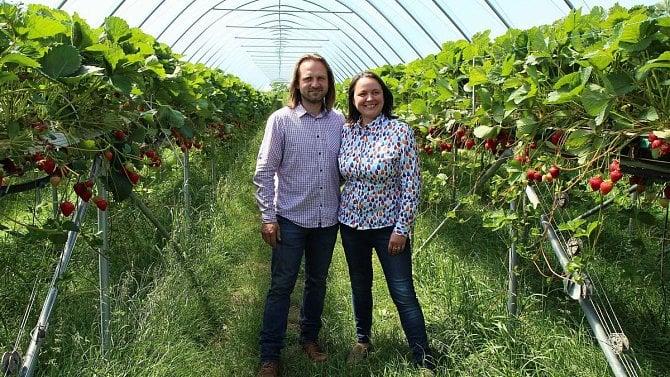 Ve Vraňanech pěstují čerstvé české jahody až osm měsíců vroce