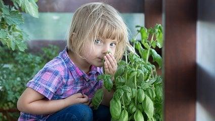 Vitalia.cz: Které bylinky už smí jíst vaše dítě