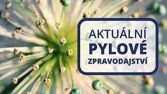 120na80.cz: V ovzduší stále zůstávají pyly šťovíku,...
