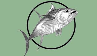 Vitalia.cz: Tři sta kilogramů tuňáka obsahovalo histamin