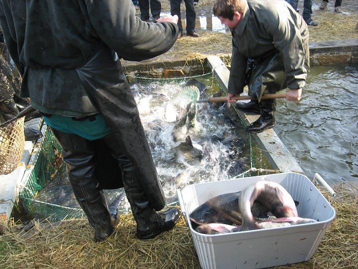 Výlov Rožmberka je gastronomickým svátkem pro milovníky ryb