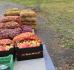 Nejakostní, falšované a nebezpečné potraviny: Brambory