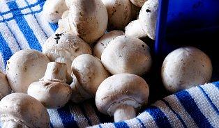 Které houby se pletou? Jedlé ajedovaté se podobají